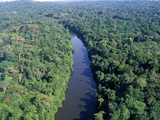 Floresta Amazônica possui clima equatorial: úmido e quente (Foto: G1)