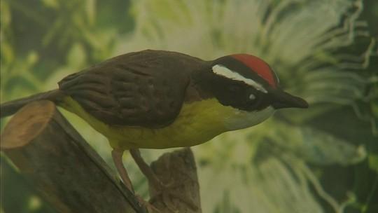 Parque Botânico do Ceará tem trilhas, orquidários e museu de fauna e flora