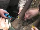 Câmera em chifre combate caça ilegal de rinocerontes
