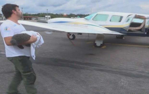 Peixe-boi foi resgado em Cruzeiro do Sul, Acre (Foto: Reprodução TV Acre)