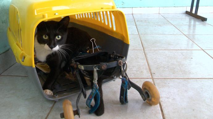 Conheça os animais especiais que esperam adoção (Foto: Divulgação/ TV Gazeta ES)