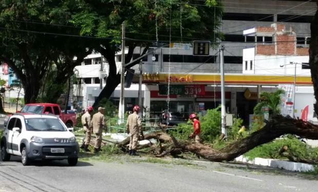 Árvore caiu no início da manhã deste sábado (Foto: Antônio Coelho/Inter TV Cabugi)
