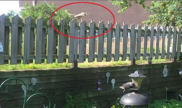 Esquilo deu salto incrível para roubar comida de alimentador de pássaros (Foto: Reprodução/LiveLeak/Plokiju)