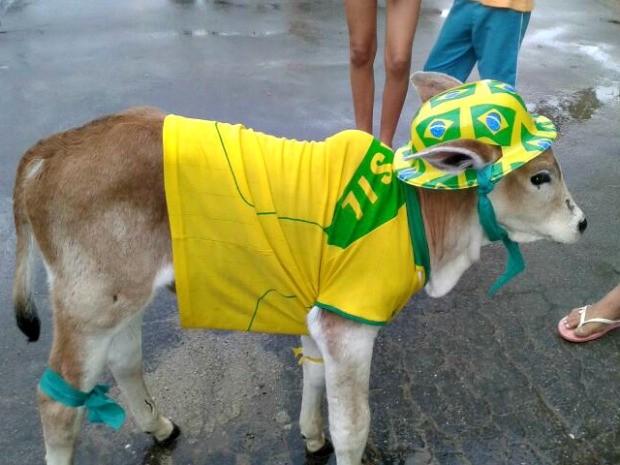 Bezerro Neymar  (Foto: Vanísia Nery/ G1)