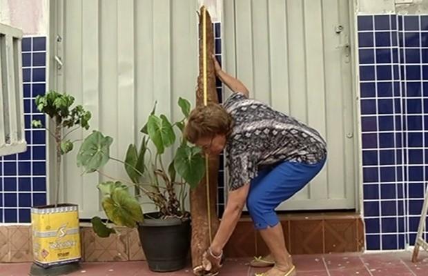 Mandioca é maior do que idosa que a encontrou em sítio de Rio Verde, Goiás (Foto: Reprodução/ TV Anhanguera)