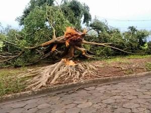 Arandu teve queda de árvores na região central da cidade (Foto: Divulgação/Portal Arandu)