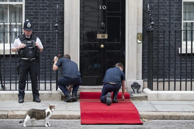 O gato Larry 'fiscaliza' a colocação de tapete vermelho neste domingo (16) em Downing Street (Foto: Justin Tallis/AFP)