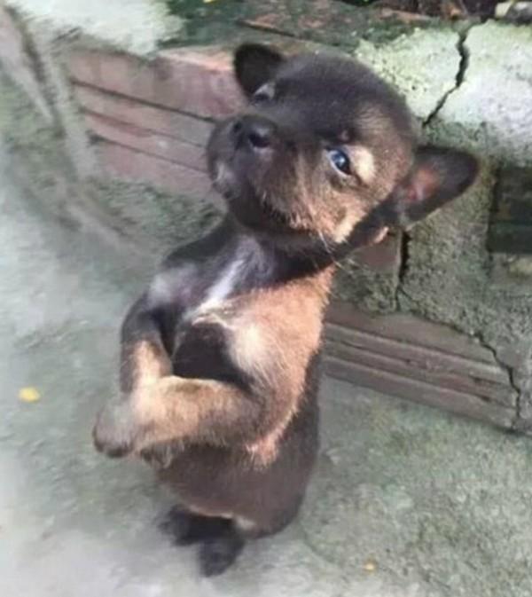 Cachorro após adoção por monjas budistas na China (Foto: Reprodução/Weibo)