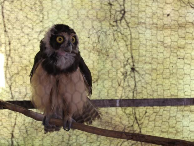 Coruja-de-óculos foi encontrada em casa na Zona Sudeste de Teresina (Foto: Catarina Costa/G1 PI)