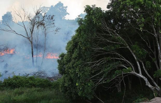 Queimada em florestas na Amazônia (Foto: Mario Tama/Getty Images)