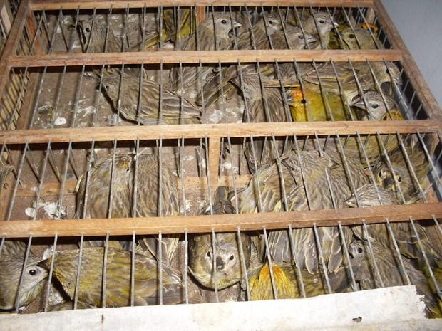 Muitas aves já estavam mortas quando foram encontradas (Fot Divulgação / Polícia Militar)
