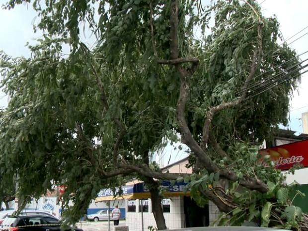 Força do vento derrubou árvore em Bento Ferreira (Foto: Reprodução/ TV Gazeta)