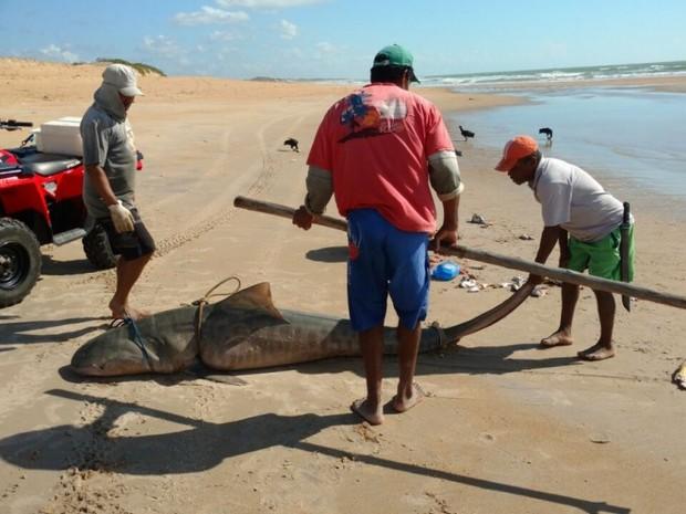 Tubarão foi encontrado por três pescadores da Vila de Itaúnas (Foto: Internauta / A Gazeta)