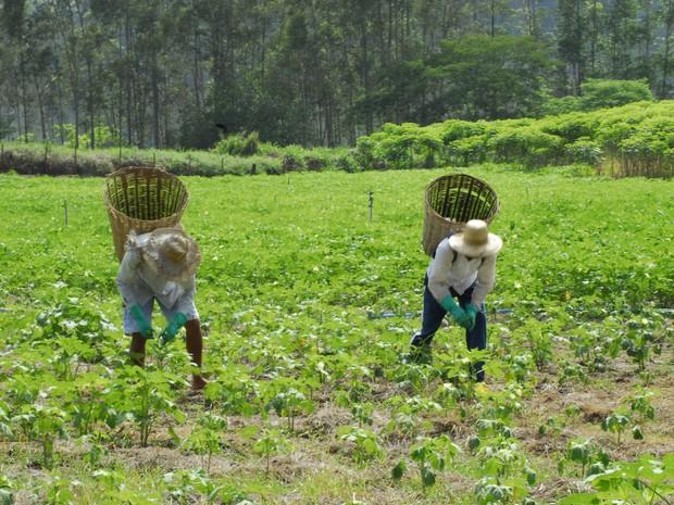 Produtores rurais de Itaocara. (Foto: Divulgação/Rio Rural)