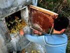 Cientistas da OMS vão à China reforçar estudos de gripe aviária