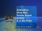 Região tem 5 cidades em emergência por causa do Aedes aegypti