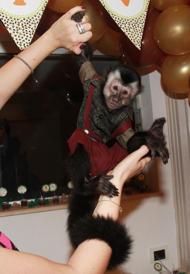 Twelves, macaco de Latino (Foto: Celso Tavares / EGO)