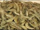 Brasil retoma as exportações de camarão para a Europa