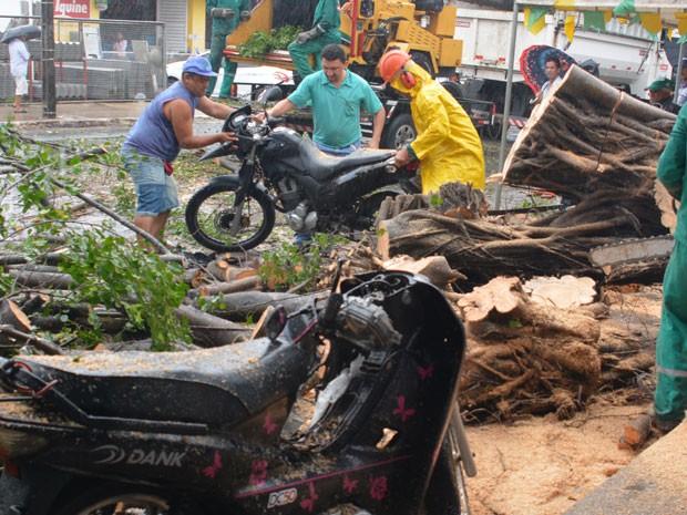 Duas árvores caíram nesta segunda-feira (8), no bairro dos estados em João Pessoa (Foto: Walter Paparazzo/G1)