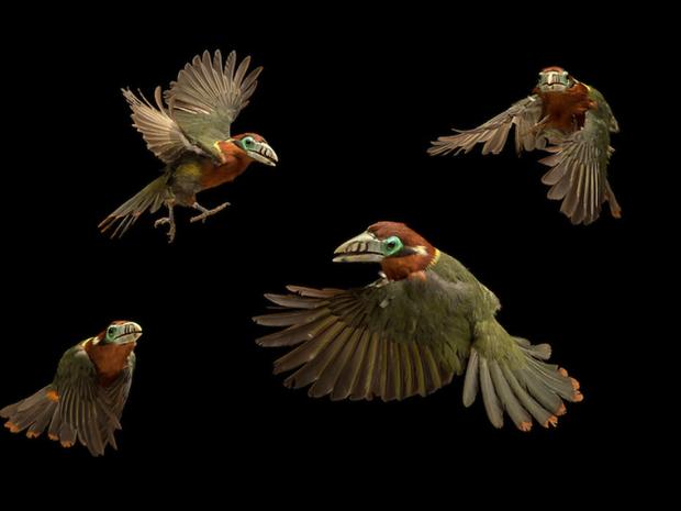 Fotógrafo reuniu melhores fotos de aves como o tucaninho araçari, ameaçado de extinção (Foto: Tony Generico)