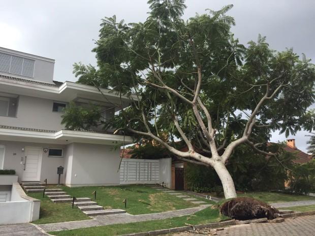 Árvore caiu em mansão em Jurerê Internacional neste domingo (4) (Foto: Daniella Peretti/RBS TV)
