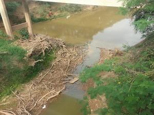 Falta de água implica na falta de peixes em Iguatama (Foto: Anna Lúcia Silva/G1)