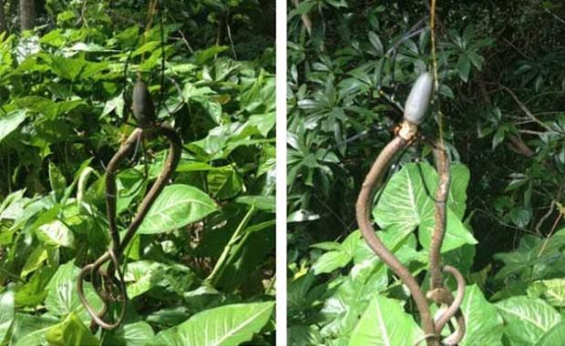 Em abril deste ano, o australiano Ant Hadleigh flagrou uma aranha devorando uma cobra em uma mata em Freshwater, Queensland, na Austrália. (Foto: Reprodução)