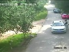 Ataque de tigre mata visitante de parque na China