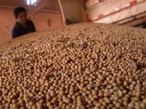 Soja armazena em silos em Mato Grosso do Sul (Foto: Reprodução/TV Morena)