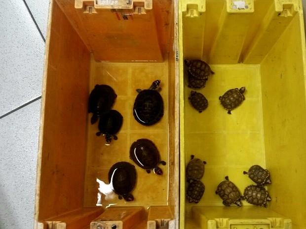 Alfândega afirma que animais estavam embalados em caixa dos Correios (Foto: Divulgação/Receita Federal)