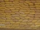 Em SP, produtividade e preços prejudicam produtores de amendoim