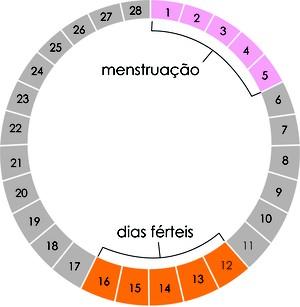 Método da tabela. Exemplo de um ciclo menstrual de 28 dias. (Foto: Reprodução/Colégio Qi)