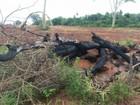 Fazendeiro é multado em R$ 42 mil por queimar vegetação em MS