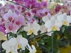 Exposição com mais de 80 espécies de orquídeas acontece em Rondônia