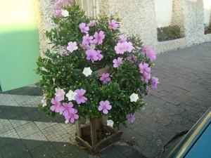 planta na rua (Foto: VC no G1)