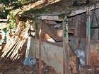 Audiência com envolvidos em fraude no leite é adiada em Ibirubá, RS