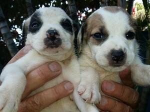 Expectativa é que aproximadamente 10 animais sejam adotados (Foto: Divulgação)
