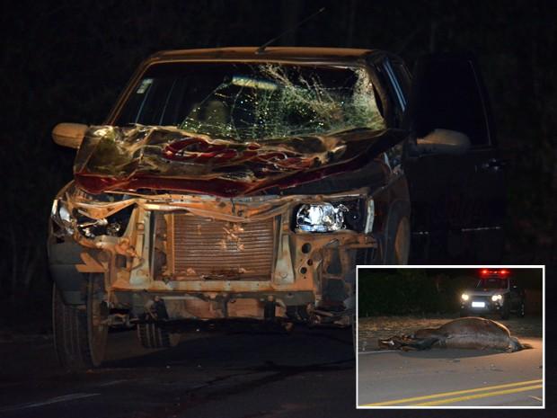 Carro teve a frente destruída ao atingir cavalo na MG-167; no detalhe, animal ficou na pista até chegada do resgate (Foto: Samantha Silva / G1)