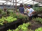 ONG dos Estados Unidos conhece diversidade de horta orgânica do AP