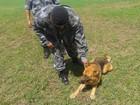 Cães farejadores do Bope atuaram em mais de 300 ocorrências no Amapá
