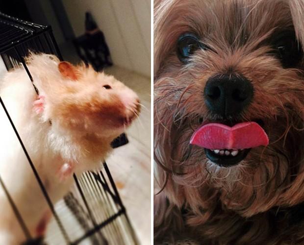 Fotos postadas pela atriz de seu hamster e sua cachorrinha (Foto: Arquivo Pessoal)