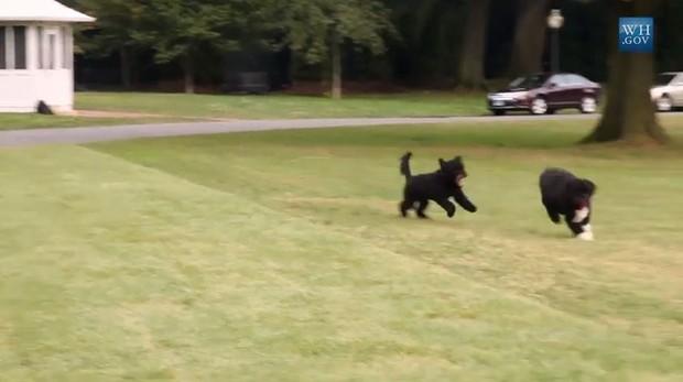 Bo e Sunny, cachorros do Obama (Foto: Video/Reprodução)