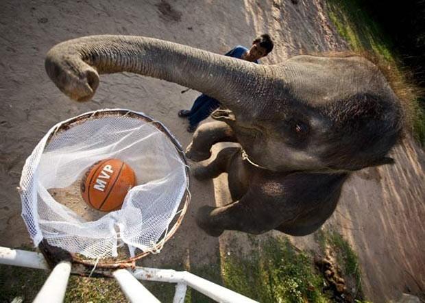 Equilibrado nas patas traseiras, um elefante joga basquete durante performance no Mae Taman Elephant Park, na Tailândia, em 2007. (Foto: AFP)