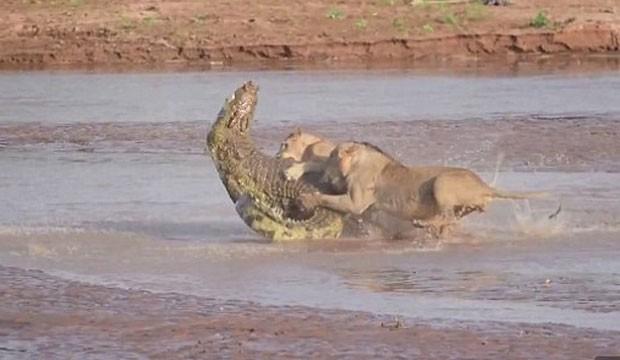 Cena ocorreu na Reserva Nacional de Samburu, no Quênia. (Foto: Reprodução/YouTube/ Kai Banks)