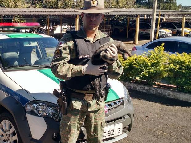 Animal recolhido em Uberlândia (Foto: Polícia Militar de Meio Ambiente/Divulgação)