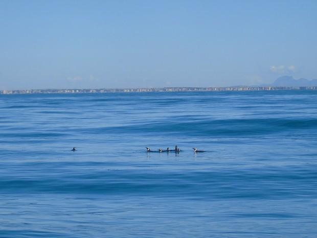 Pinguins são soltos no mar da praia de Iriri, em Anchieta, Sul do ES. (Foto: Divulgação/Ipram)