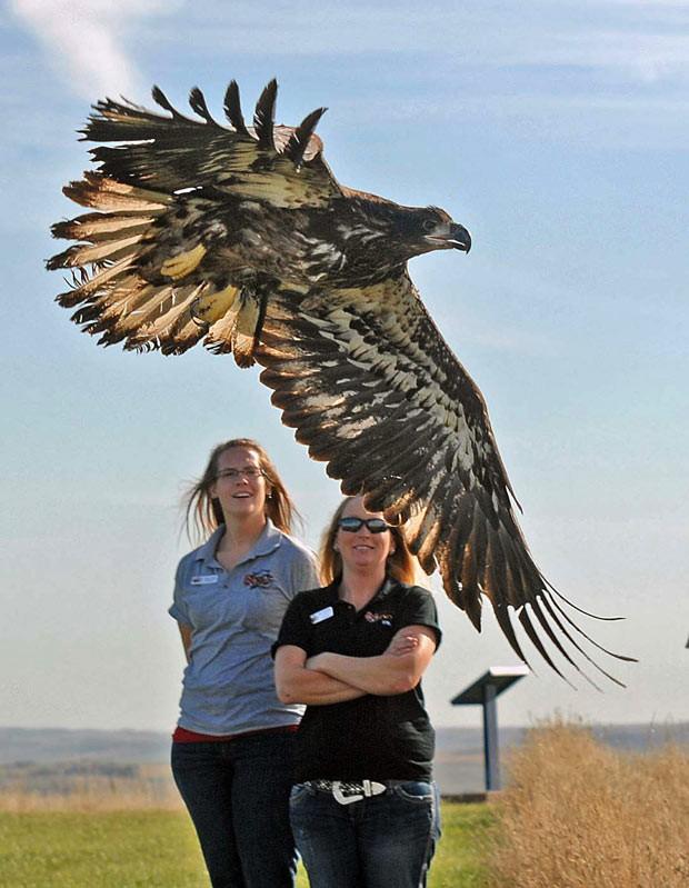 Águia alça voo no Parque Estadual Abraham Lincoln; Allison Suda (esq.) e Becky Walcker (dir.), funcionárias do Roosevelt Park Zoo observam a ave.  (Foto: AP Photo/The Bismarck Tribune, Tom Stromme)