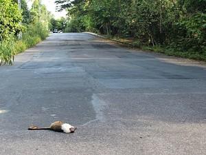 Sauim-de-coleira foi encontrado morto em APA na Zona Leste de Manaus (Foto: Erika Scholoemp/Divulgação)