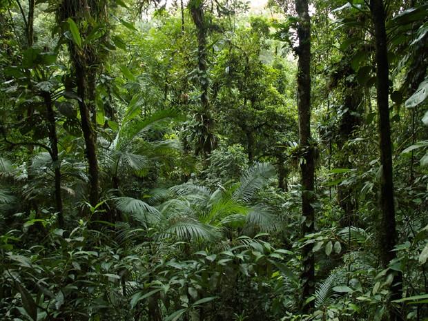 Floresta de Mata Atlântica no Brasil (Foto: Image courtesy of Pedro Jordano/Science)