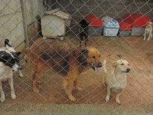 Abrigo Amor Animal atende em média 67 cães e 40 gatos (Foto: Ivana Santana/G1)